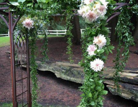 Juniper Flowers
