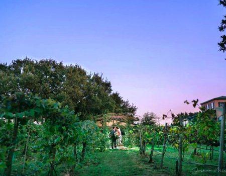Oak Valley Vineyards