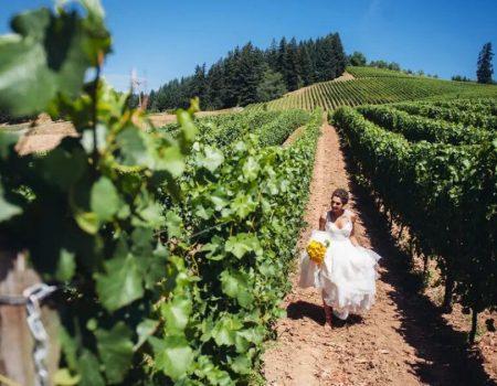 Saffron Fields Vineyard